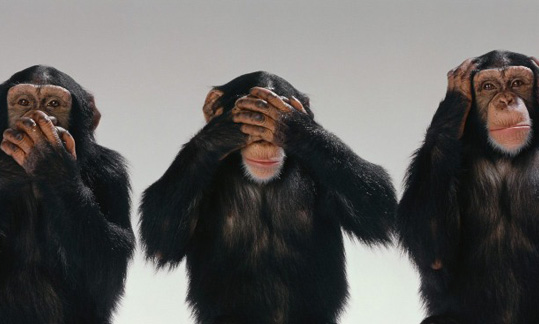 Chimps posing as Speak no Evil, See no Evil, hear no Evil