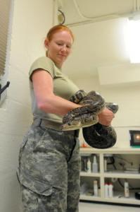 Image of boa snake at Guantanamo